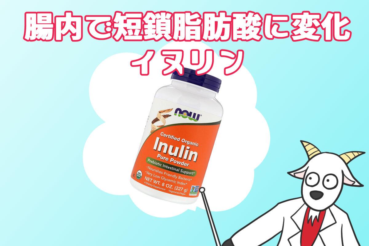 イヌリン・腸内で短鎖脂肪酸に変化