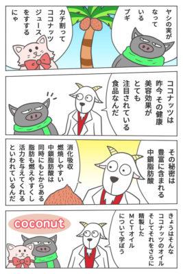 ココナッツオイルとMCTオイルについて【マンガ・海外サプリ・iHerb】
