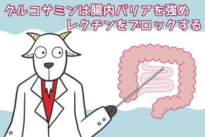 グルコサミンは腸内バリアを強めレクチンをブロックする